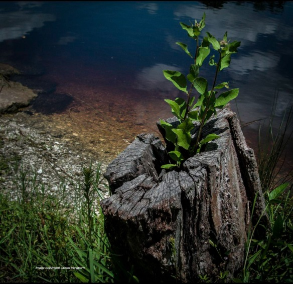 tree stump beside water