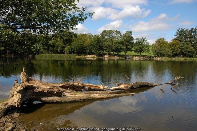 dead tree in water