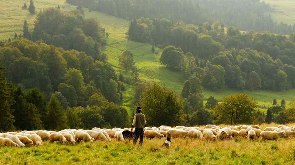 shepherd-biegun-wschodni-8636(https-:unsplash.com:@biegunwschodni)-compressed