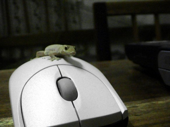 gecko on computer mouse