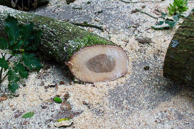 cut tree with sawdust