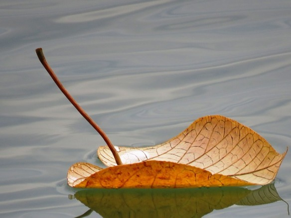 leaf floating on water