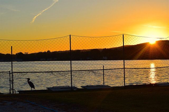sunset and heron behind fence