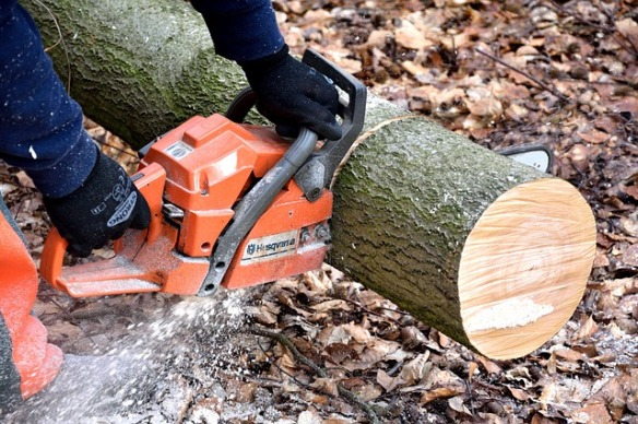 A chain saw cutting a tree trunk