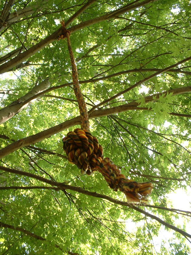 upward view of a rope with knot at end hanging down from a large tree