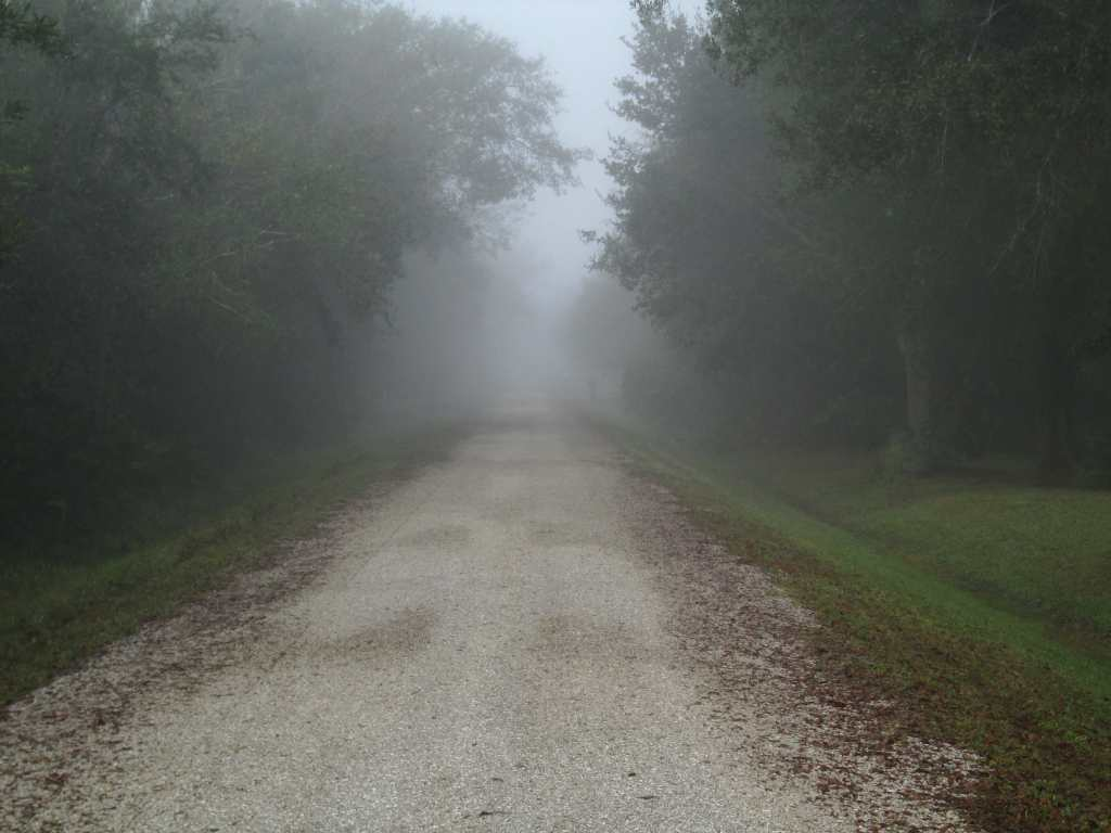 A tree lined gravel road with fog in the distance and fallen leaves on the side