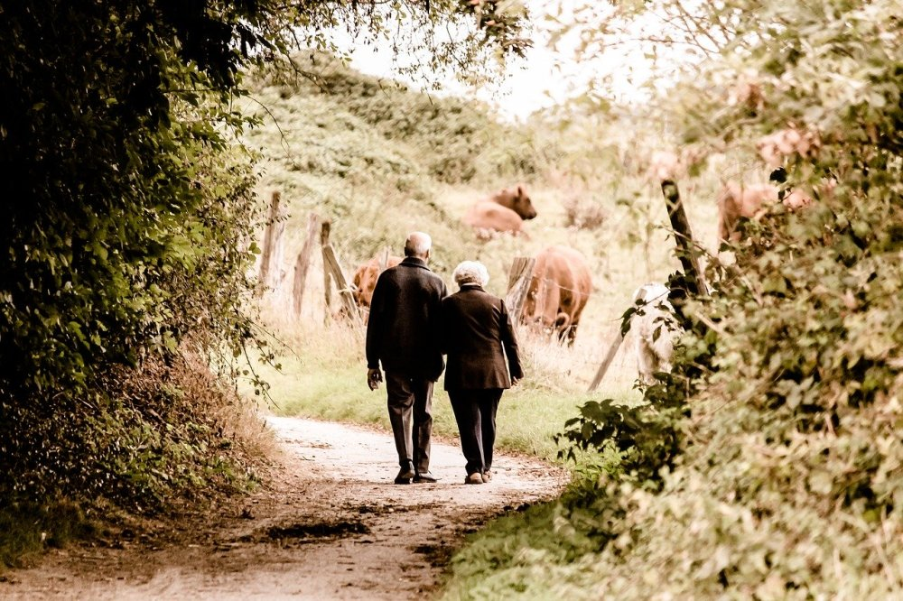 An older couple walking along a country brush lined path with brown cows grazing in the distance