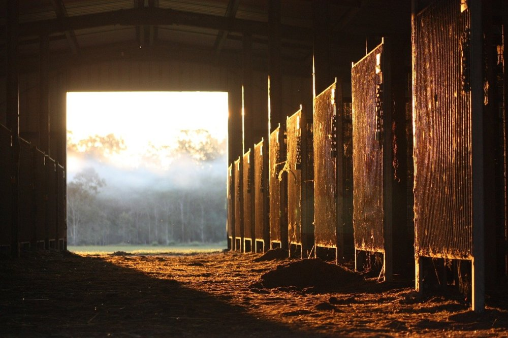 Golden sunlight illuminating the horse stalls in a barn with an overexposed foggy forest seen through the barn's opening in the background