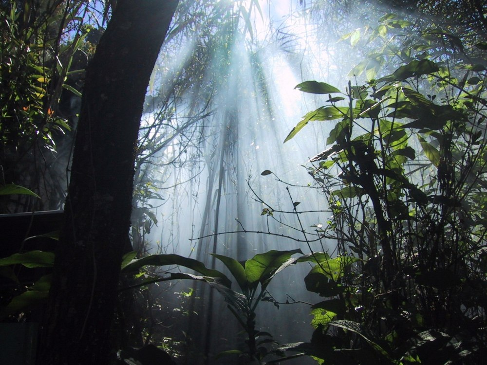 A tropical forest with assorted green plants and white sunbeams coming down through a light haze