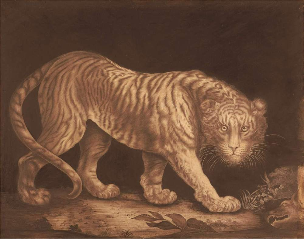 A monochrome drawing of a large tiger looking at the viewer with a dark background and a couple of dead animals on the ground near its head