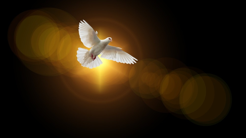 A graphical image of a white wingspread dove overhead with a sun behind against a bronze background